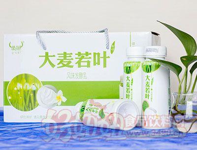 圣湖大麦若叶风味发酵乳230g礼盒