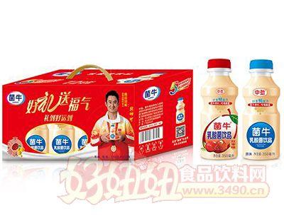 菌牛红枣+原味乳酸菌饮品礼盒350mlx10瓶
