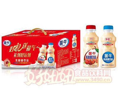 菌牛原味+红枣味乳酸菌饮品礼盒350mlx10瓶