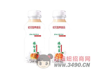 初元智养臻智菌黄桃发酵风味饮品340ml瓶装