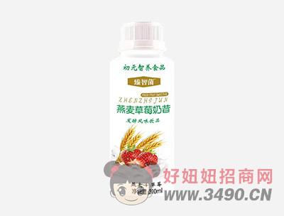 初元智养臻智菌燕麦草莓奶昔发酵风味饮品310ml