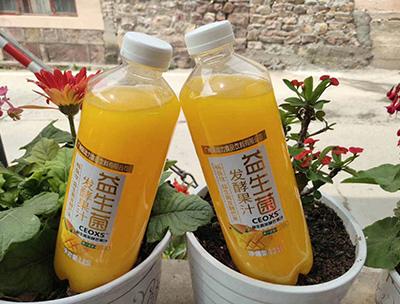 益生菌发酵芒果汁1.25L