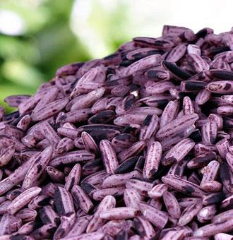 紫米的功效与作用