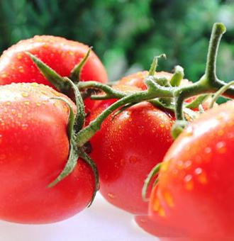 西红柿和皮皮虾能一起吃吗_一吃会中毒吗