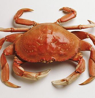 螃蟹和西红柿能一起吃吗,螃蟹和番茄一起吃会怎么样?