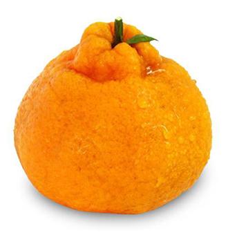 丑橘的食用禁忌