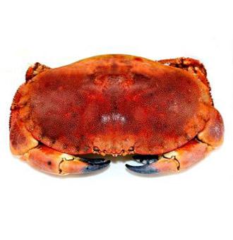 面包蟹是海蟹吗