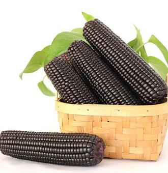 黑玉米不能和什么一起吃