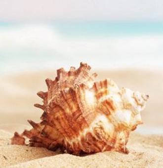 海螺的�介