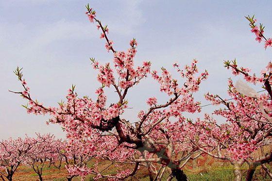 伏羲洞位于桃花源風景區內
