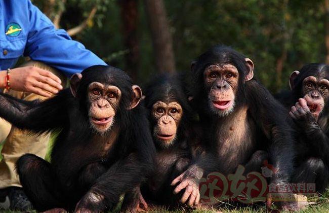 上海野生动物园猩猩