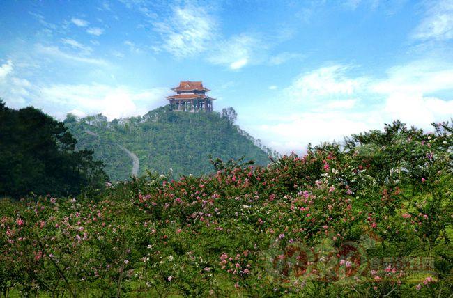 北京松山森林公园保护区总面积4660公顷,其中:核心区1463.3公顷、实验区1802.5公顷、旅游区1394.2公顷。野生动植物资源丰富,植被茂密,有脊椎动物180多种,有维管束植物700多种。保存比较完好的天然油松林50公顷。清朝嘉庆年间对此有松柏葱翠,黛色横天的碑文记载。如今春秋季节,百花盛开,鸟雀争鸣,呈现一派大自然的勃勃生机。松山旅游区以自然景观为主体,风景资源雄厚,独具特色 .