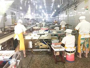 湖南洞庭仙草食品有限公司工人正在制作