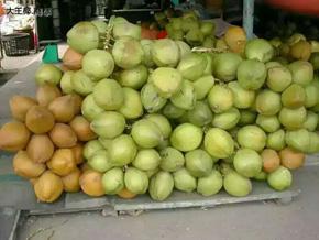 绿健源采用的椰子
