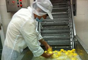 机器清洗柠檬