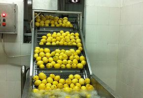 再次清洗柠檬