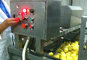 机器烘干柠檬