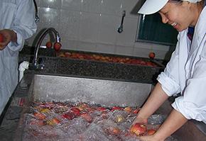 人工清洗苹果