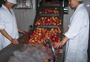 机器清洗苹果