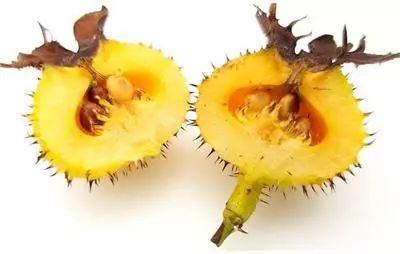 果中王者��I�B,�@�N水果就�]怕�^�l!你喜�g它的味道��?
