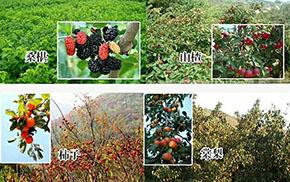 山西花烂漫土特产产品开发有限公司水果产地