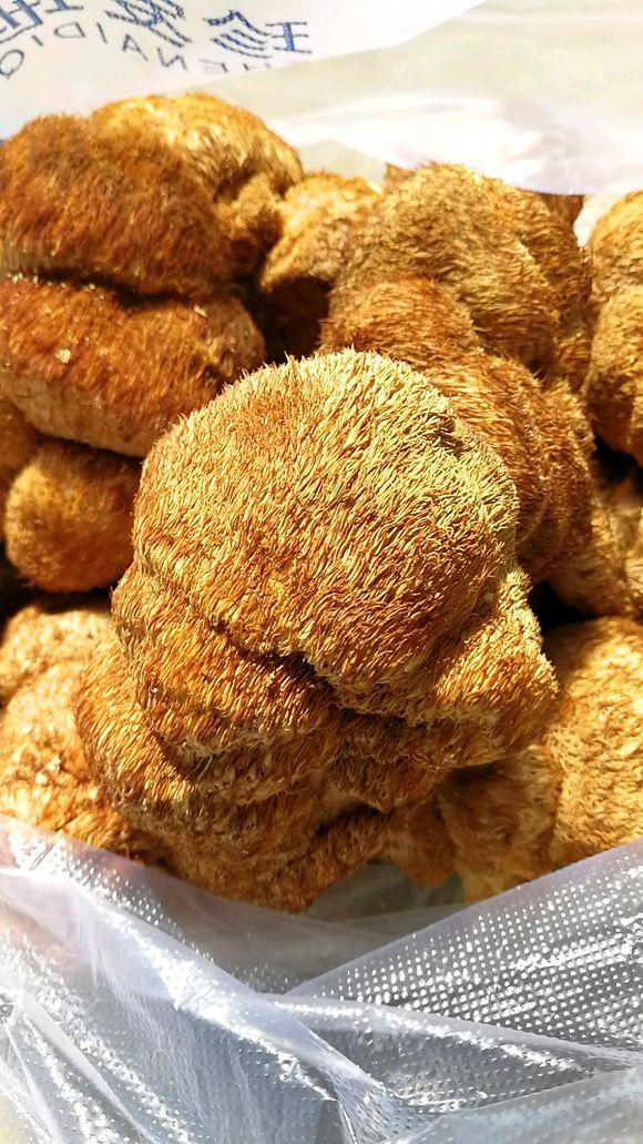 中国猴头菇之乡产地直销精品猴头菇