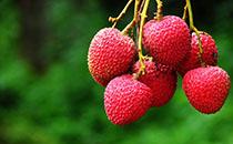 荔枝有哪些营养价值?孕妇吃荔枝有哪些好处?