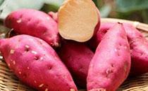 红薯作为粗粮多吃可以预防糖尿病吗