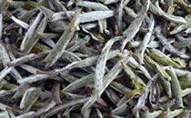 福鼎白茶有哪些营养价值?