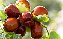 减肥期间可以吃冬枣吗,冬枣的热量高吗