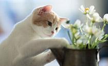 猫罐头什么牌子好?