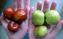 青枣和红枣是一样的吗,红枣和青枣的区别