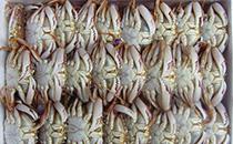 超市的冻螃蟹能吃吗