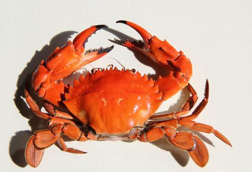 宝宝多大可以吃螃蟹