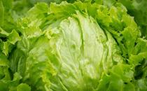 卷心菜富含�SC 常食可抗衰老