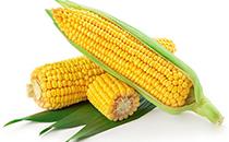 玉米不甜怎么做好吃 玉米是糯的好�是甜的好
