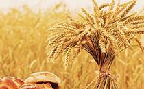 小麦为什么要磨成粉做面食吃,不做米饭吃?