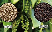 白胡椒和黑胡椒有什么区别 ?