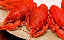 澳洲大龙虾虾脑能吃吗