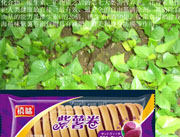 福建龙海紫薯面包