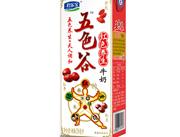 五色谷红色养生牛奶250ml