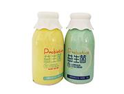 福淋益生菌发酵型含乳饮品各种口味380g