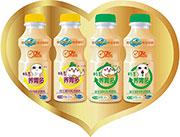 聪明点畅享养胃多原味益生菌风味发酵乳350ml