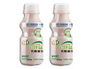 味动力君伴益生乳酸菌饮品330ml