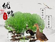 月湾香生态老鸭