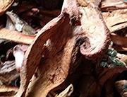 黄花松蘑-润龙