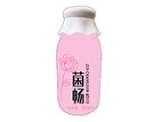 菌畅益生菌酸奶饮品350ml粉