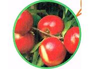 原生态油桃