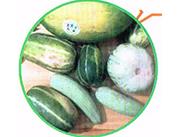 原生态西瓜-甜蜜瓜