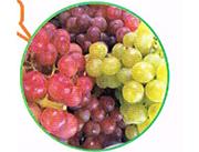 原生态葡萄